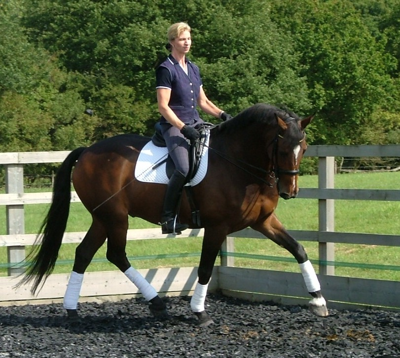 Wanted: More Men in Dressage - EquiSearch.com – Expert advice on